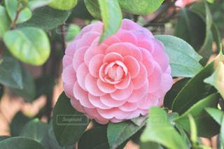 花の写真・画像素材[394941]