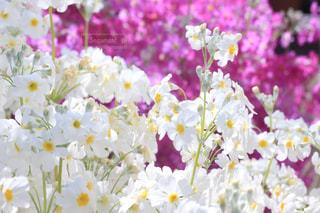 花の写真・画像素材[394946]