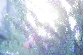 花 - No.398854