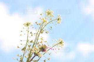 空の写真・画像素材[402739]
