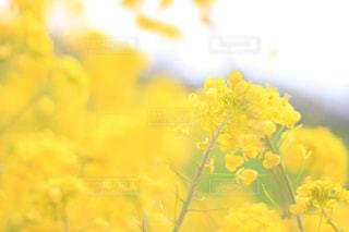 風景 - No.402745