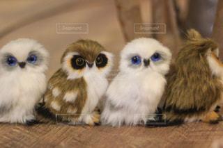 カフェ,夜,動物,鳥,かわいい,ぬいぐるみ,癒し,ふくろう,猛禽類