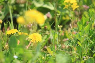 花の写真・画像素材[418381]