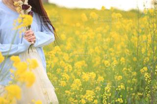春 - No.457258
