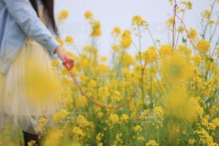 春の写真・画像素材[457259]