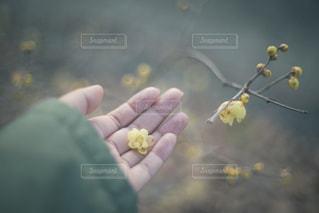 花を持っている人の写真・画像素材[1007744]