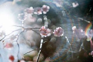 梅と光 - No.1046253