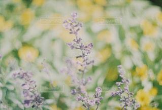 近くの花のアップの写真・画像素材[1046258]