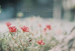 近くの花の写真・画像素材[1046259]