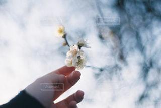 青い曇り空を持っている手の写真・画像素材[1847347]