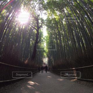 京都の写真・画像素材[394417]