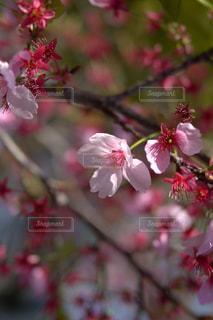 花 - No.394492