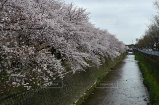 花 - No.394510