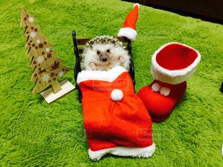 クリスマスの写真・画像素材[465291]