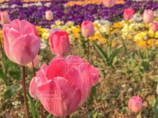 花の写真・画像素材[394783]