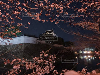 春 - No.404970