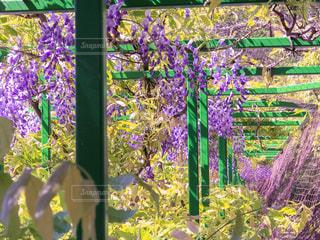 花の写真・画像素材[447792]