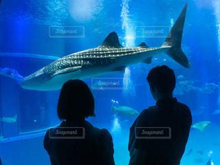 ナイスなカップルとジンベイザメの写真・画像素材[737744]