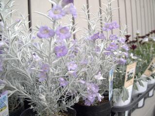 花の写真・画像素材[427334]