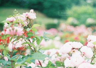 花 - No.394767