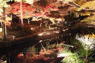 秋の写真・画像素材[394846]
