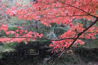 秋の写真・画像素材[394848]