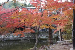 秋の写真・画像素材[394849]