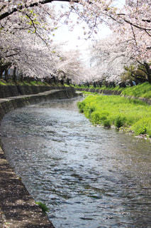 春の写真・画像素材[429803]
