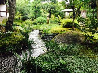 京都 風景の写真・画像素材[394908]