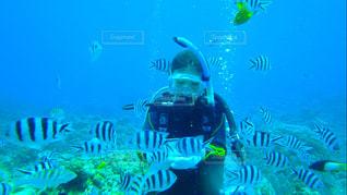 #海の写真・画像素材[395036]