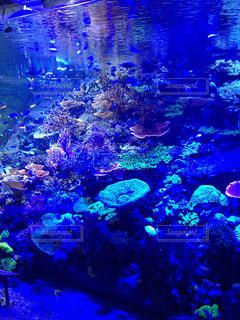 No.395112 サンゴ