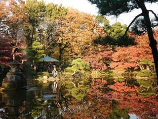 公園の写真・画像素材[397118]