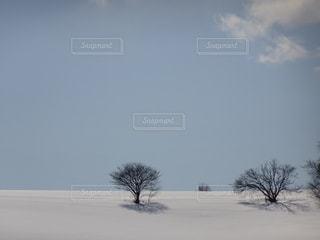 冬の写真・画像素材[398935]