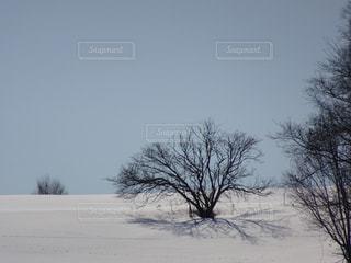 冬 - No.398944