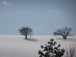 冬 - No.398946
