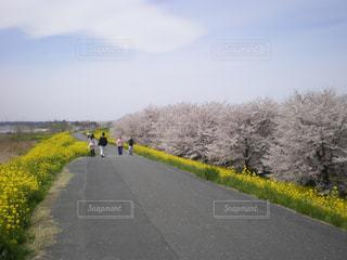 花の写真・画像素材[399239]