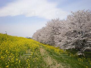 花の写真・画像素材[399241]