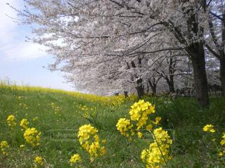 花の写真・画像素材[399245]