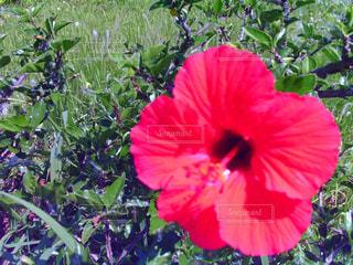 花の写真・画像素材[518471]