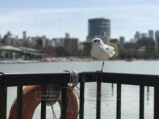 都市の写真・画像素材[395655]