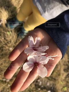 花を持っている手の写真・画像素材[1103768]