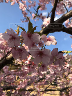 春の写真・画像素材[398976]