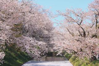 春の写真・画像素材[397885]