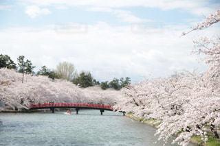 春の写真・画像素材[456411]