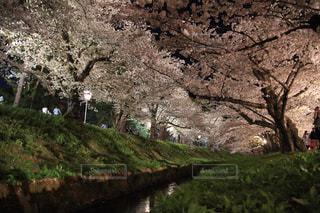 春の写真・画像素材[459428]