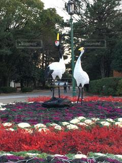公園の写真・画像素材[396438]