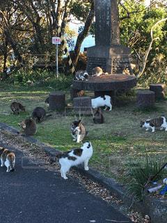 猫の写真・画像素材[396474]