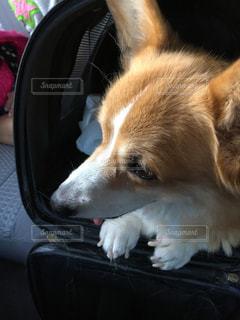 犬の写真・画像素材[396498]