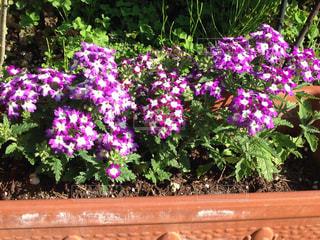 花の写真・画像素材[396591]