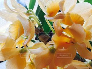 花の写真・画像素材[400366]